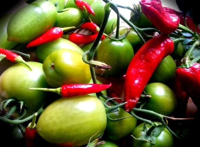 помидоры соленые по-грузински